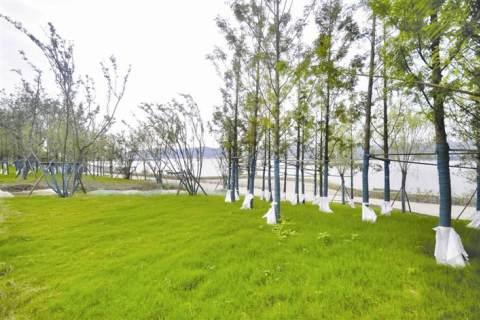 長江沿岸添新綠