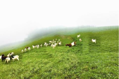 水清草绿牛羊肥