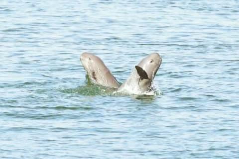 湖北日报:江豚舞起水上芭蕾